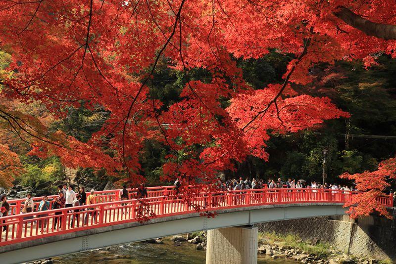 hẻm núi korankei mùa lá đỏ